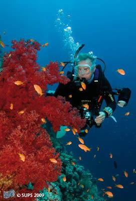 Bob and Reef